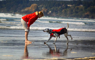 5-safety-tips-for-taking-dog-to-the-beach5