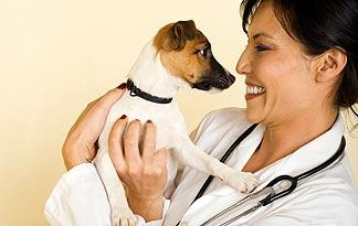 5-signs-sick-jack-russell0