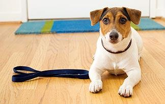 5-signs-sick-jack-russell2