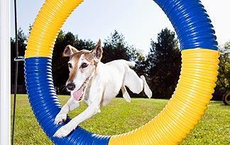 5-small-dog-exercises2