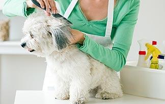 5-small-dog-grooming-tips0
