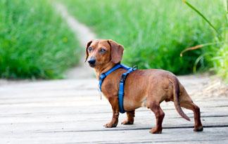 How Can I Help My Dogs Arthritis?