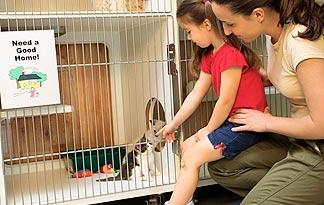 5-tips-for-introducing-kittens-and-kids0