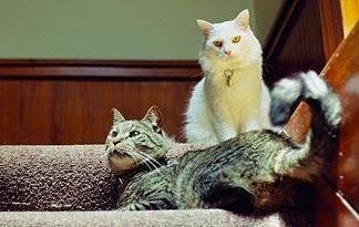 5-tips-to-stop-cats-from-fighting1
