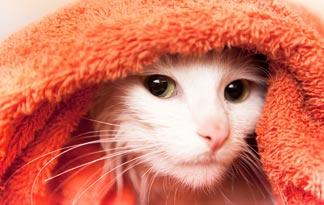 5-tips-to-stop-cats-from-fighting2
