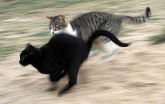 5-tips-to-stop-cats-from-fighting5