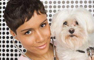 adopting-a-bichon-frise3