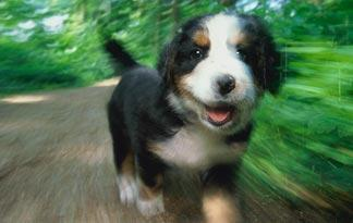 adventures-for-puppies-5-324x205