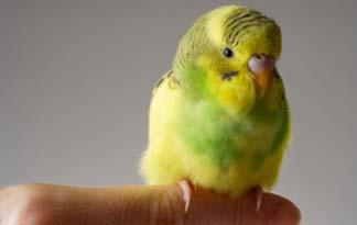 Image of: Oliver Hellowell Bird Feather Allergies Animal Planet Bird Feather Allergies Healthy Pets Animal Planet