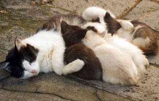 cat tourniquet application