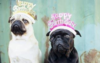 best-dog-birthday-party-ideas0