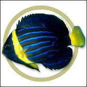bluelineangel0