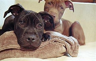 breed-specific-legislation0
