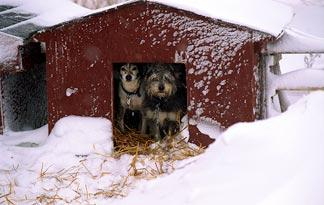 can-dogs-live-outside-in-all-seasons2