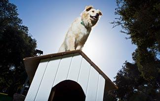 can-dogs-live-outside-in-all-seasons3