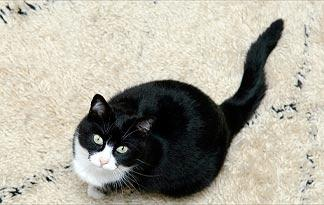 carpet-chemicals-harm-your-cat0