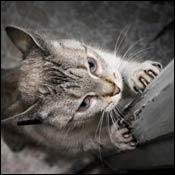 cat-cat-behavioral-problems0