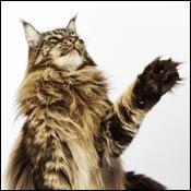 cat-cat-claws0