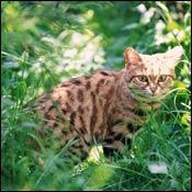 cat-cat-marks-territory0