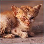 cat-emergency-cat-burns0