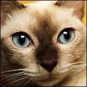 cat-emergency-cat-eye-injuries0