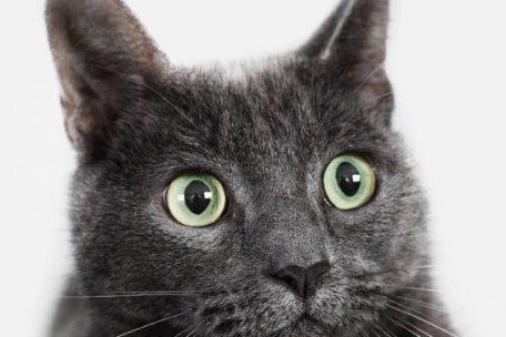 cat-face-456x204-250x150