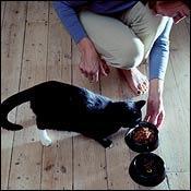 cat-feeding-nutrition0