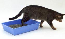 Why Would A Cat Stop Using His Litter Box