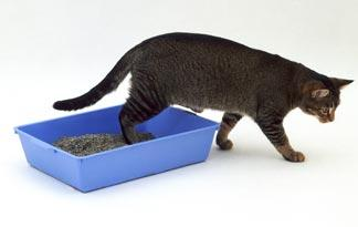 cat-stop-using-the-litter-box0