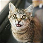 cat-understanding-cat-language0