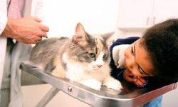 Do cats need an FVRCP vaccination? | Animal Planet