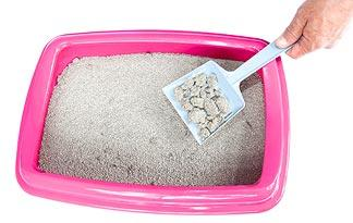 Clay Vs Clumping Cat Litter