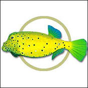 cubeboxfish0