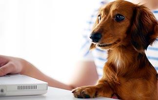 dachshund-hot-dog0