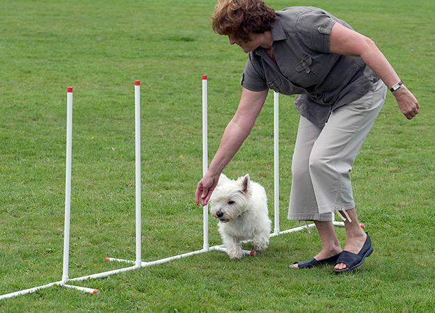 dog-agility-training-02-625x450