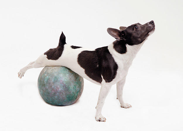 Image result for dogs exercising