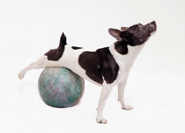 dog-exercise-equipment-01-625x450