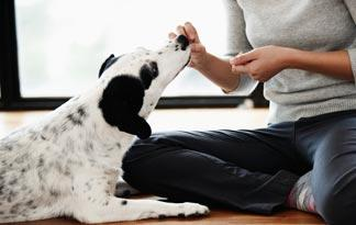 dog-food-benefits-high-fiber-dog-food0