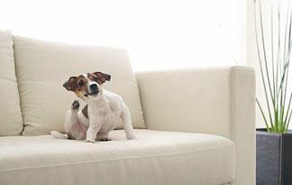 dog-food-what-is-sensitive-skin-dog-food1