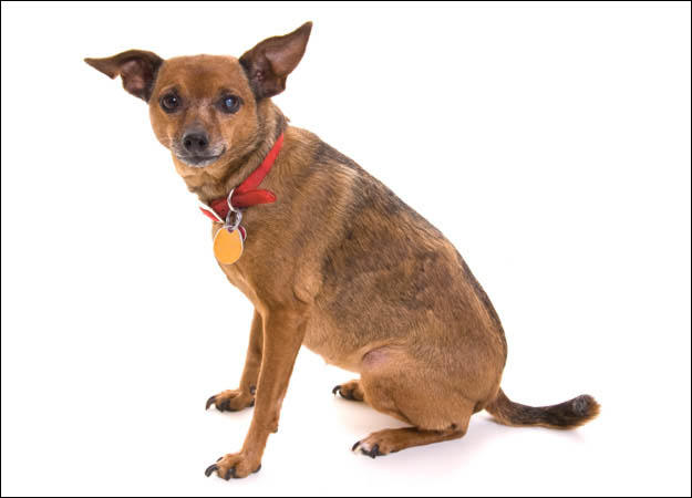 mixed breeds rarest dog all Quotes