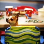 dog-treats3