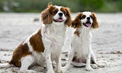5 Famous Small Dogs in History