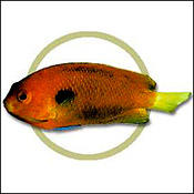 fishersangel0