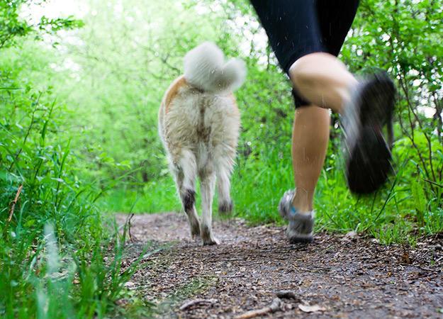 fun-ways-to-exercise-dog-02-625x450