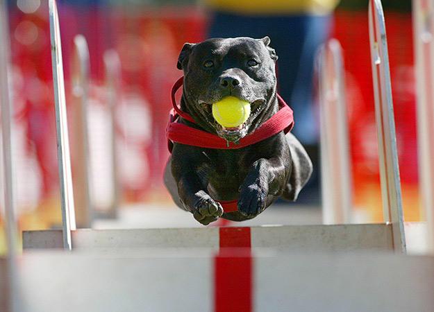 fun-ways-to-exercise-dog-03-625x450