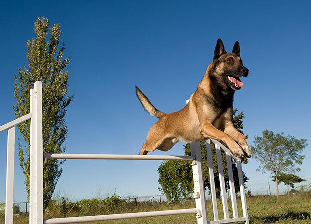 fun-ways-to-exercise-dog-04-625x450