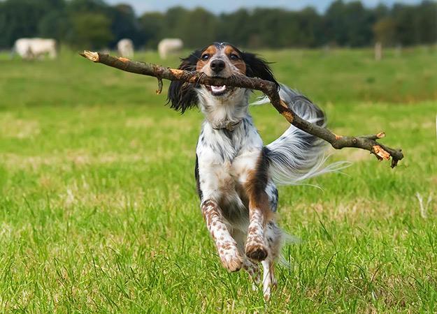 fun-ways-to-exercise-dog-06-625x450