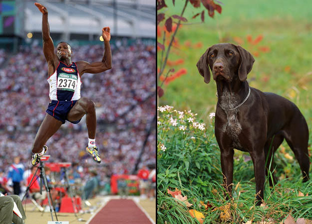 gold-medal-long-jump0