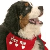 grooming-tips-pet-teeth-cleaning0