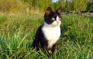 how-to-get-rid-of-ticks-on-cats1